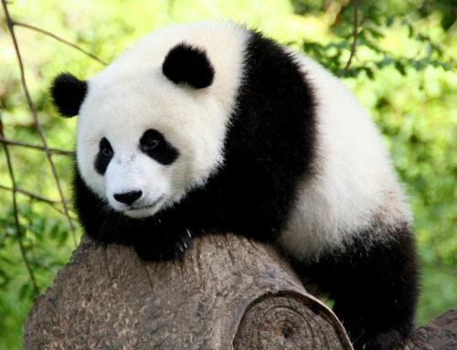 Google Panda 4.0 vuelve a primar los contenidos de calidad